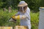 Система за видеонаблюдение на пчелин